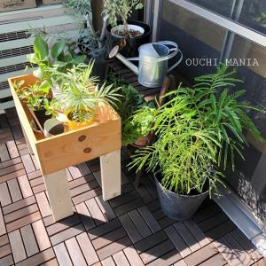 リビングに観葉植物、枯らさない為に大切な事