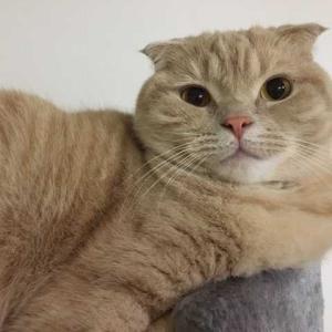 猫にキャットタワーは必要か?