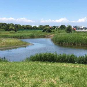 お散歩 東京港野鳥公園