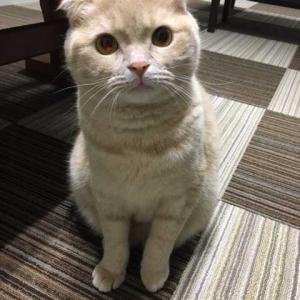 猫と飼い主の関係