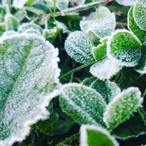 寒い朝・初霜と露