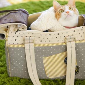 お猫さまのキャリーバッグを購入💕おぬこさまゲスト出演あり😂