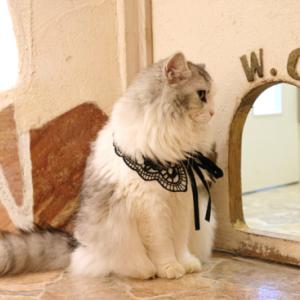 お猫さまのトイレがすごすぎる!