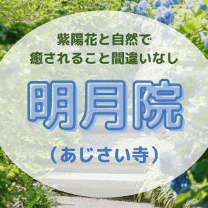 【鎌倉】明月院の紫陽花が最高!ハナショウブ開花により本堂奥の庭園も公開中