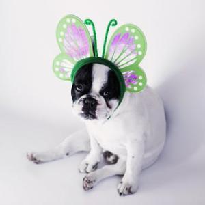 犬の食物アレルギーに昆虫食!?