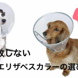【獣医師が解説】失敗しない犬用エリザベスカラーの選び方