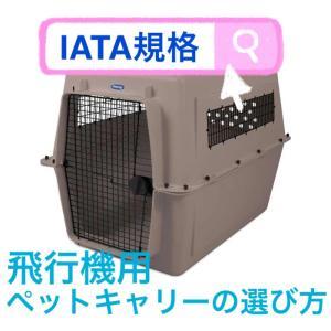 【IATA規格対応】飛行機用キャリーの選び方