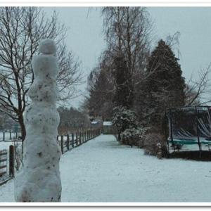 雪が降ると、桶屋が儲かる・・・ことはないけど、庭人口が増えるw