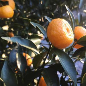 橘を少しだけ・・
