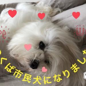 茨城県つくば市民犬になりました。