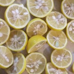 花ゆずでジャムを作る、切り口の美しさに惚れ惚れする、、が柚子胡椒が好き