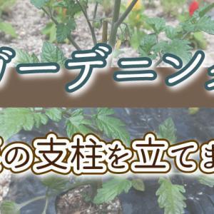 野菜(ミニトマト、パプリカ)の支柱を立てました!