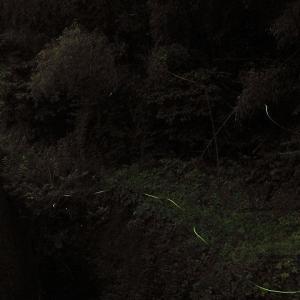 奥迫川で蛍狩り