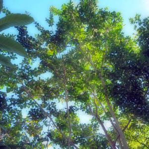 Aki Kuwayama 祈りのジュエリー展 2021 光の樹