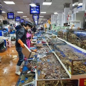 日常 「ノリャンジン水産市場」