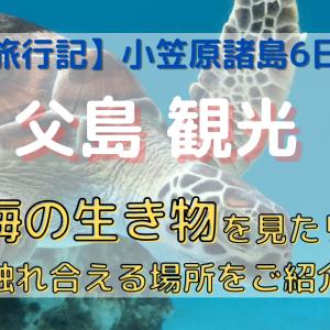 父島観光 海の生き物を見たり触れ合える場所2選 【旅行記】小笠原諸島6日間