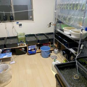 熱帯魚の引っ越しスタートします。