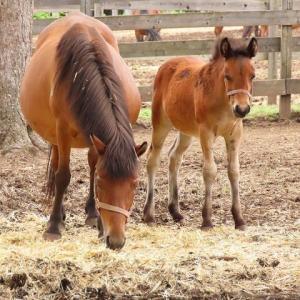 2021年6/23~木曽馬とササユリ