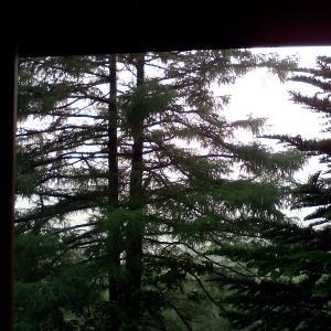 豪雨と落雷