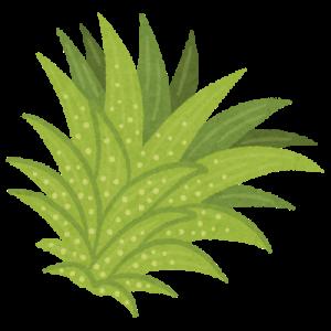 ずぼらでも育つ、おすすめの植物