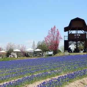 世羅高原農場の花畑風景 NO,1