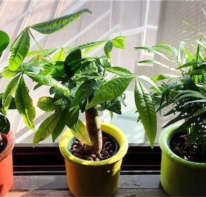 植物の生命力の凄さに感動!
