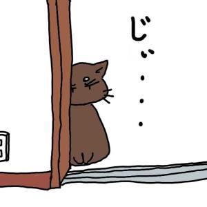 うちの愛しのチョコちゃん(猫)