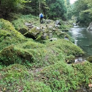 京都久多川渓流釣り(放流濃密区間下の落ちアマゴ狙い)