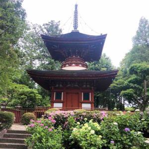 橿原市久米町にある来目皇子創建の『久米寺』では紫陽花が見頃でした。多宝塔や眼病治癒にご利益のある薬師如来も