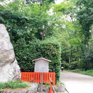 京都市左京区 下鴨神社を取り囲む世界文化遺産『糺ノ森』は東京ドーム3個分の広さ!平安時代の祭祀跡も。