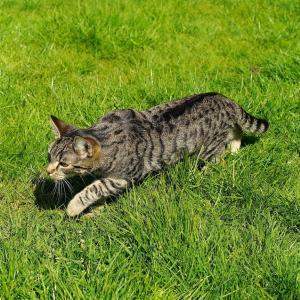 【草の食べ過ぎ?】猫が猫草を食べる3つの理由