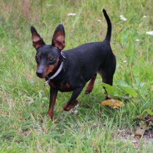 私の大切な大切な愛犬「スニフ」が、ある日突然血管肉腫と診断されました