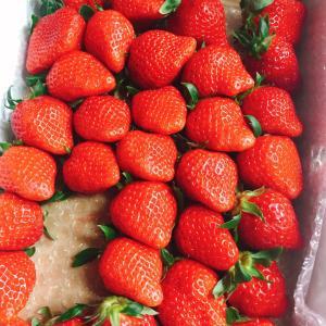 たくさんの苺を頬ばる幸せ❤️