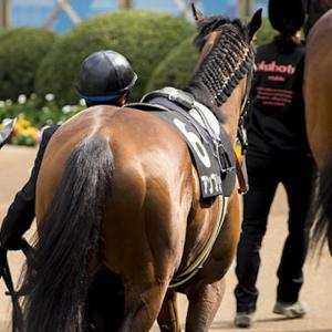 【展望】シルクロードステークス 〜モズスーパーフレア登場!この馬の作るペースにあやかりたい馬も多数で前か後ろか。それが問題だ〜