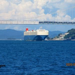 GARDENIA ACE(PCC・RORO船)