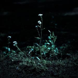 私が子供の頃、墓石と遊んでいた話