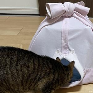 DIYクラフト・カジュアルは卒業してフォーマルな猫テント