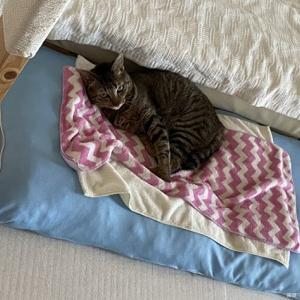 我が家の猫・ひんやりクッションはお好き?