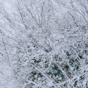 積雪のピーク!と言われていたが