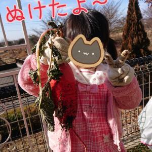 コルクマットをたくさん張ったよ&モナカ前髪とひげをすこしチョッキン&家庭菜園「赤サラダ大根」収穫