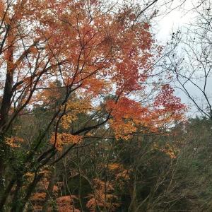 『月川荘キャンプ場』混雑時のお勧めサイトは?薪は?【自然の薪で紅葉ソロキャンプ】