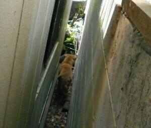 山の犬を捕獲