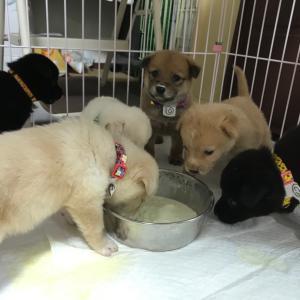 6匹の仔犬ちゃんがやってきた❣️