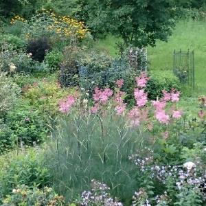 """庭造りの方法 (35) """"大きくなりすぎる植物"""""""