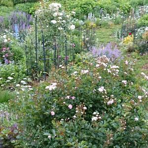 バラ庭と過ごす1日