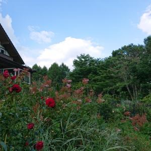 庭と夏空と