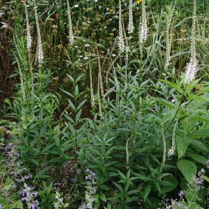 テッポウムシ対策と夏の庭
