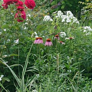 庭と過ごす夏の日々