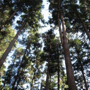 木材のお勉強 針葉樹と広葉樹
