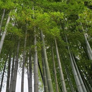 竹のブームが来てるんですか?